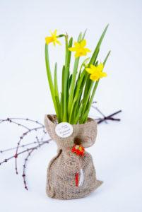 narcise flori cadou